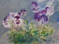 Bloemen - Viooltjes 50 x 65 ipp aquarel