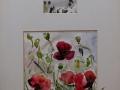 Bloemen - klaprozen 40 x 30 ipp (alu lijst)