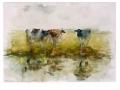 Koeien aan het water