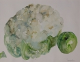 Stilleven met bloemkool en appel 50 x 60 ipp aquarel