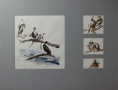 Vogelstudies in Artis - 65 x 50