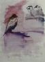 Vogelstudies in Artis III - 65 x 50