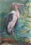 Afrikaanse Maraboe 65 x 50 gouache (alu lijst)