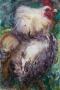 Kip 50 x 65 ipp aquarel