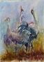 Kraanvogels 60 x 50 aquarel (alu lijst)