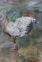 Lady Amherst (fazant) 60 x 45 gouache (houten lijst)