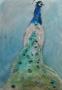 Pauw - aquarel - 65 x 50